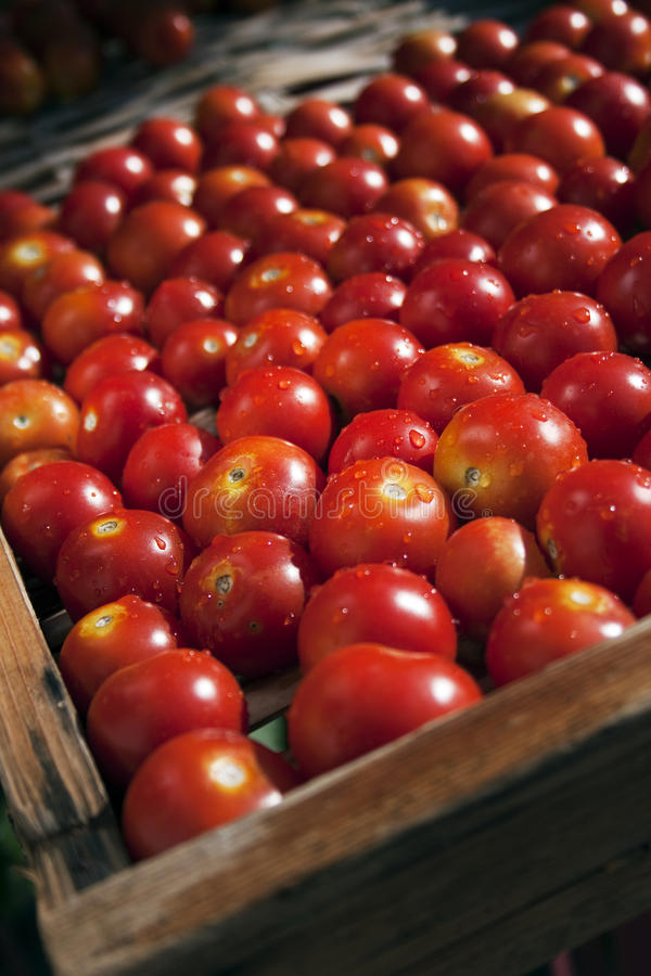 Download Red Cherry Tomatoes Royalty Free Stock Image - Image: 32503696
