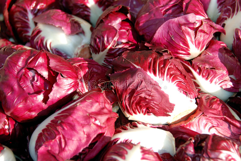 Red chicory royalty free stock photos
