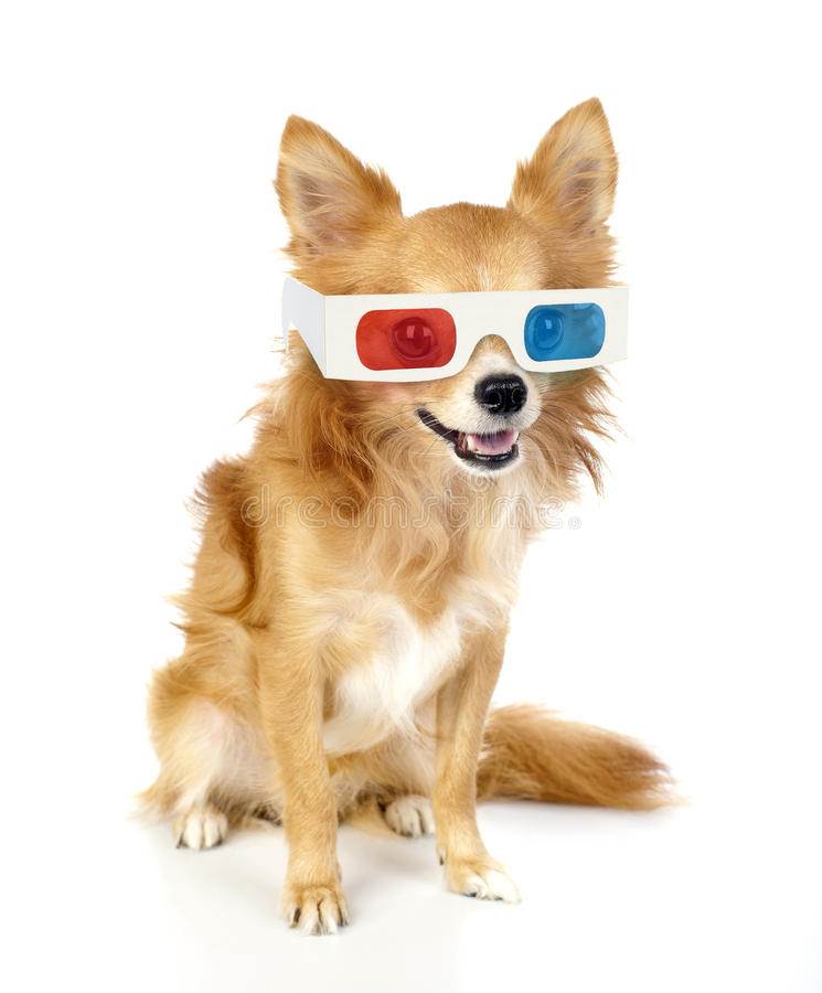 Red chihuahua dog with 3d glasses royalty free stock photos