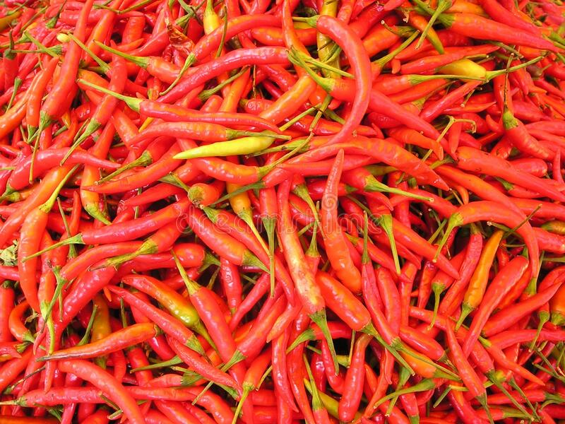Red Chili stock photos