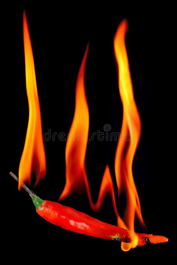 Download Red Chili Pepper On Fire Stock Photo - Image: 14807790