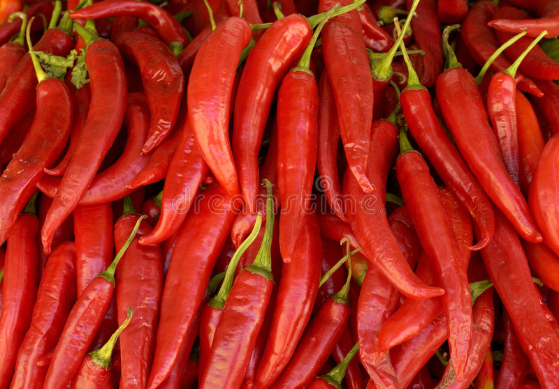Red chili peppers royalty free stock photos