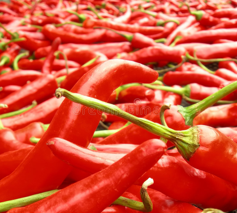 Red Chili Peppers Drying in the Sun stock image