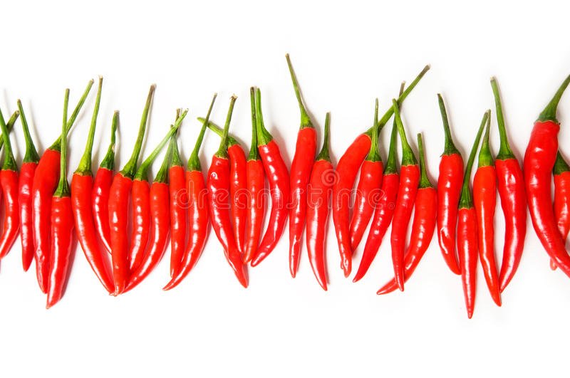 Red chili peppers isolated. On the white stock images