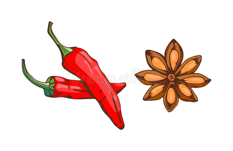 Red chilli pepper with anise star food seasoning hand drawn style vegetable ingredient paprika spicy and fresh. Red chilli pepper with anise star food vegetable vector illustration