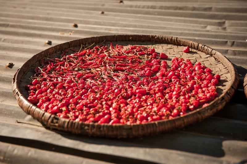 Red chilli pepper on a big plate drying in the sun. Dried red peppers in a  bowl at the roof drying. Nepal countryside. Himalayas, royalty free stock photo