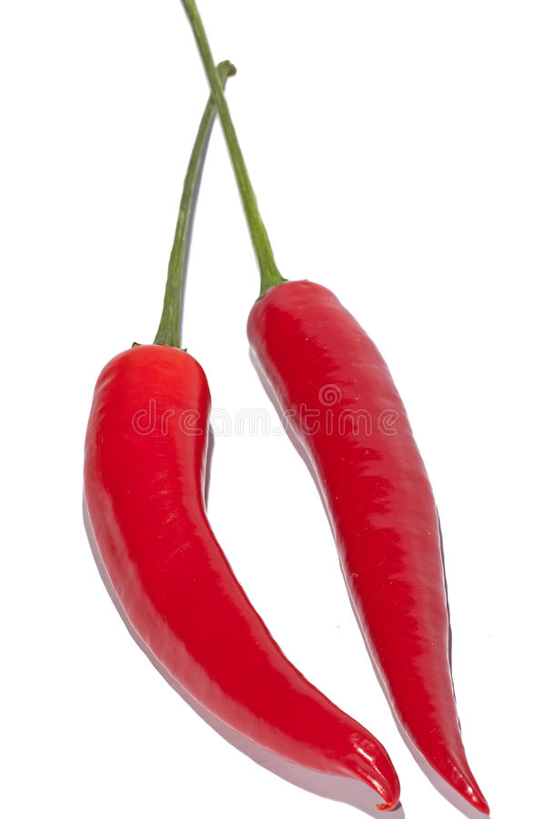 Red chillies royalty free stock image