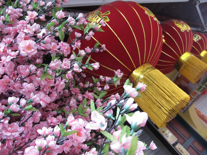 Red Chinese hanging lamp and pink blossom royalty free stock images