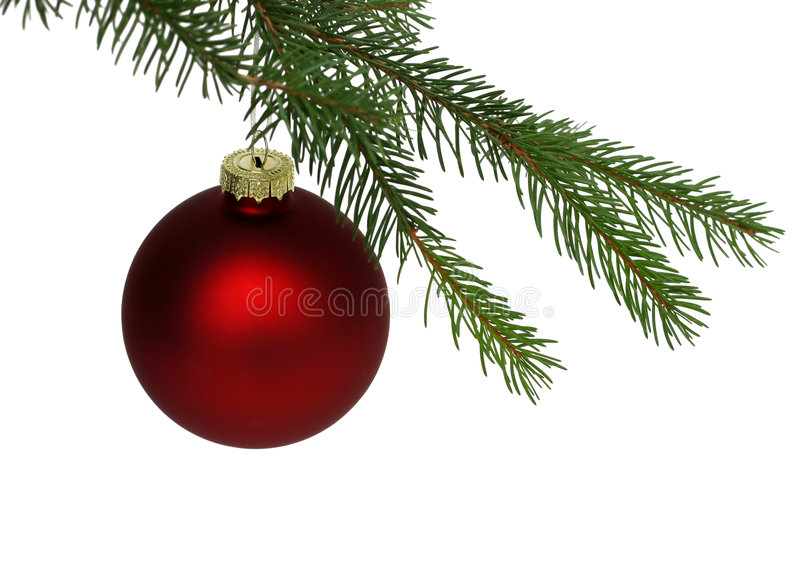 Red Christmas Ball. Matte red Christmas ball hanging from pine tree, isolated