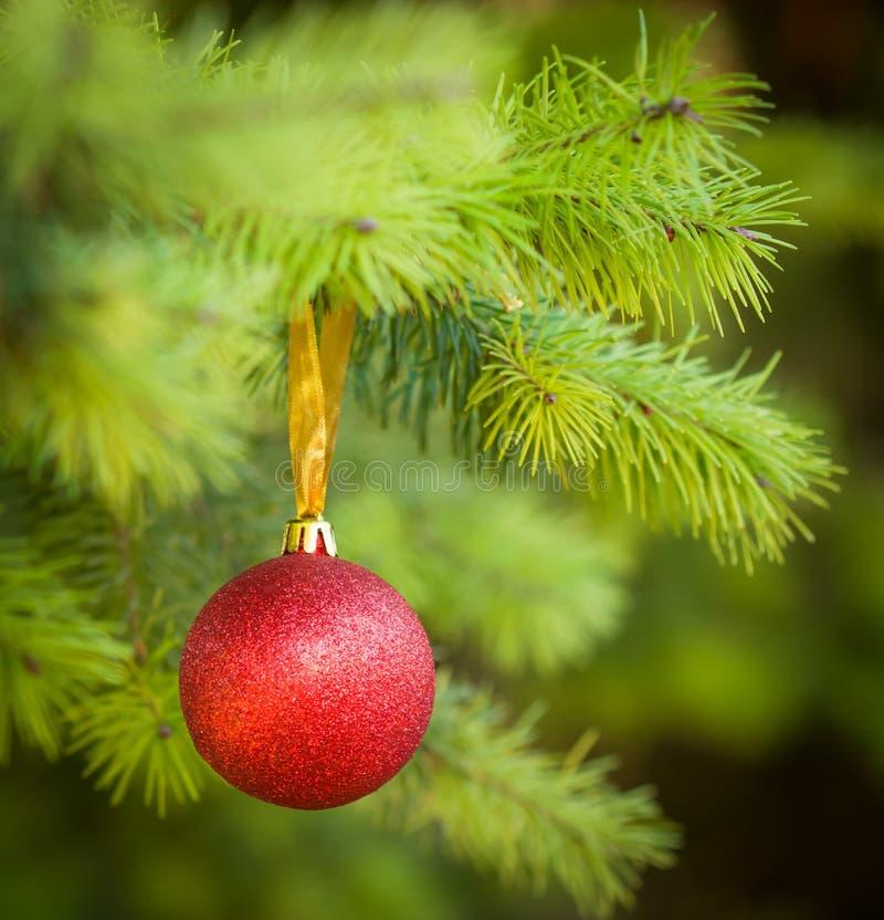 Red Christmas Ball (xmas Ball) On Christmas Tree Royalty Free Stock Photography