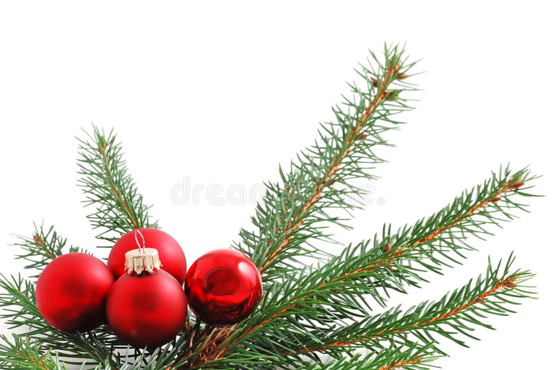 Red Christmas Balls. And pine branch royalty free stock image