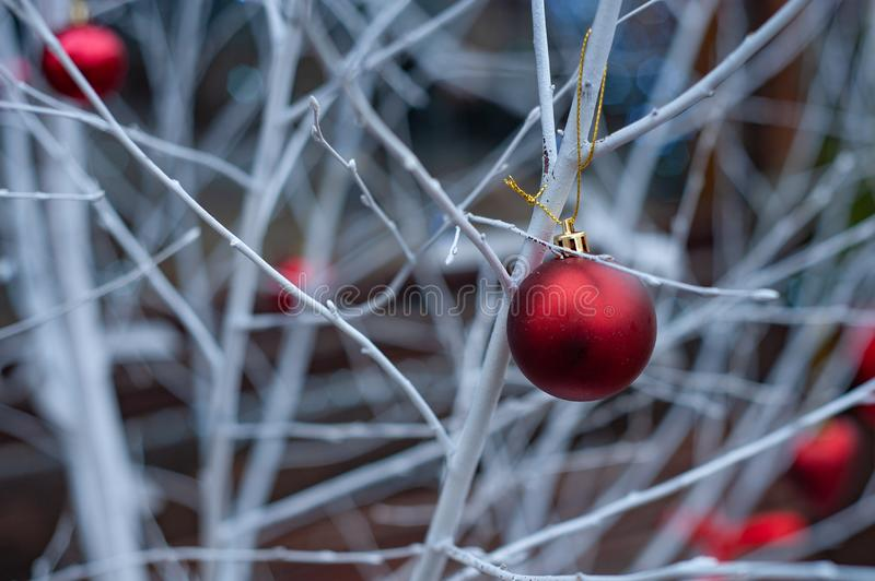 Red Christmas balls on white branches stock image