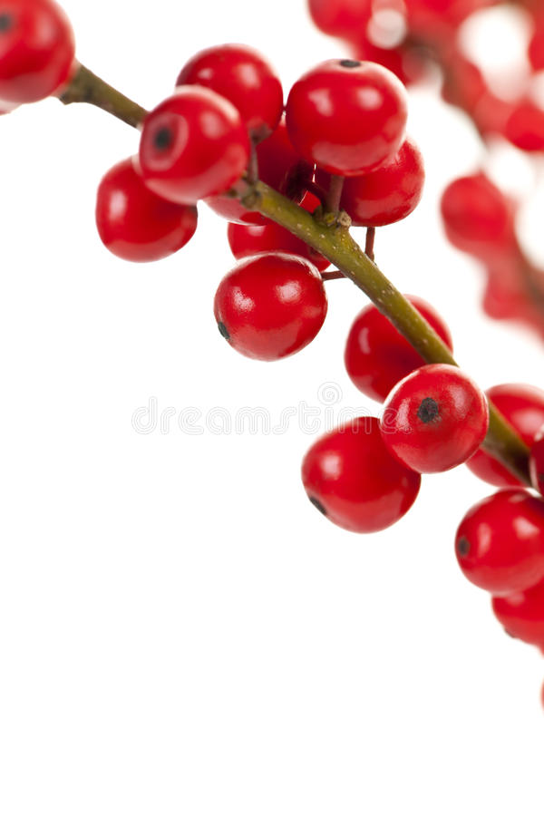 Download Red Christmas berries stock photo. Image of festive, close - 21118704