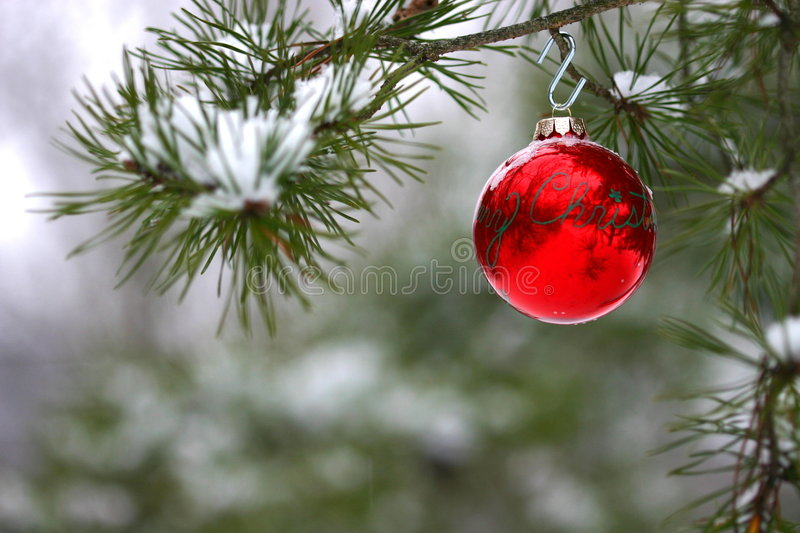 Red Christmas Decoration On Snow-covered Pine Tree Outdoors Stock Images