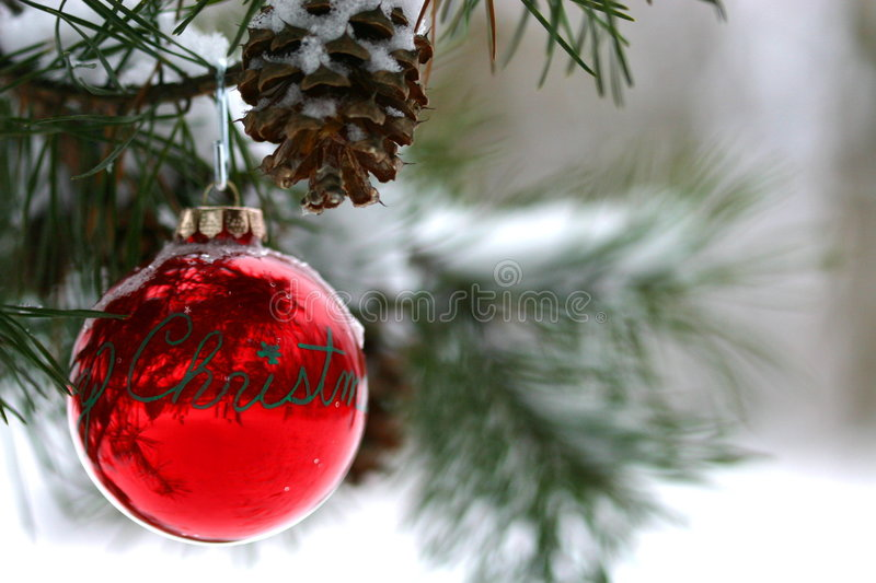 Download Red Christmas Decoration On Snow-covered Pine Tree Outdoors Stock Image - Image: 1860079