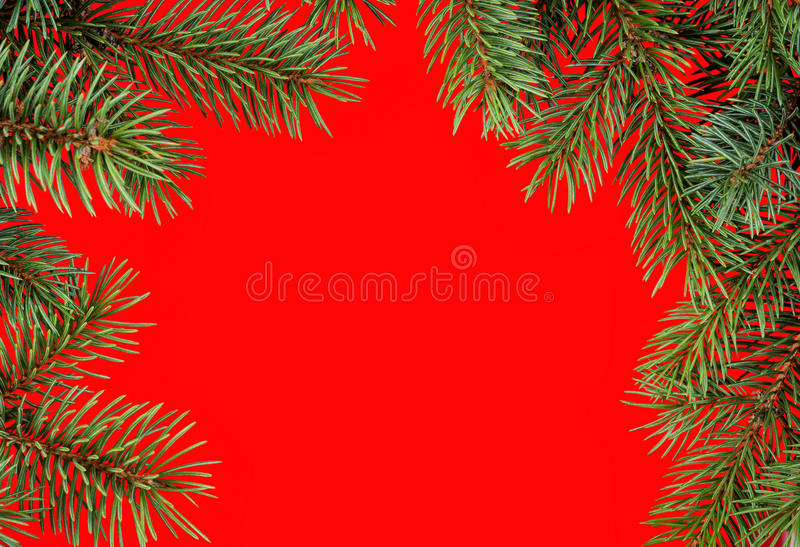 Red christmas frame from fir branches royalty free stock image