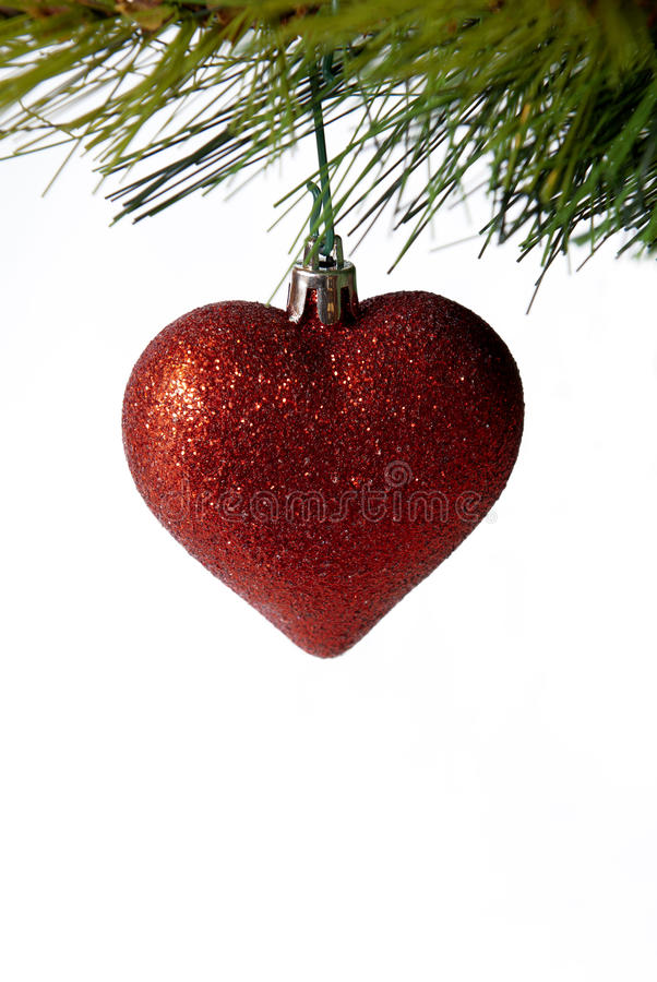 Red Christmas heart. Hangs from pine branch on white background royalty free stock images