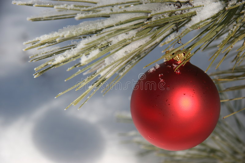 Red Christmas Ornament in Snowy Pine Tree stock photography