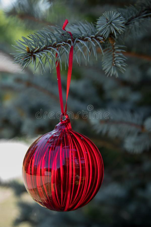 Red christmas ornaments, red ball, on the xmas tree blurred branch . Merry christmas card. Winter holiday theme. Happy New Year. royalty free stock photography