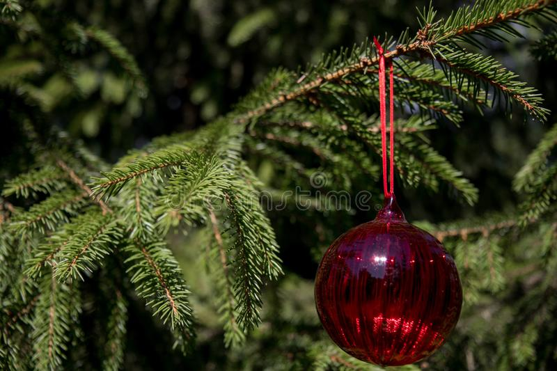 Red christmas ornaments, red ball, on the xmas tree on blurred branch .Merry christmas card. Winter holiday theme. Happy New Year. royalty free stock images