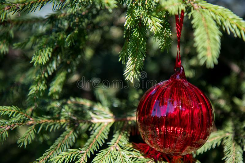 Red christmas ornaments, red ball, on the xmas tree on blurred branch . Merry christmas card. Winter holiday theme. Happy New Year royalty free stock photography