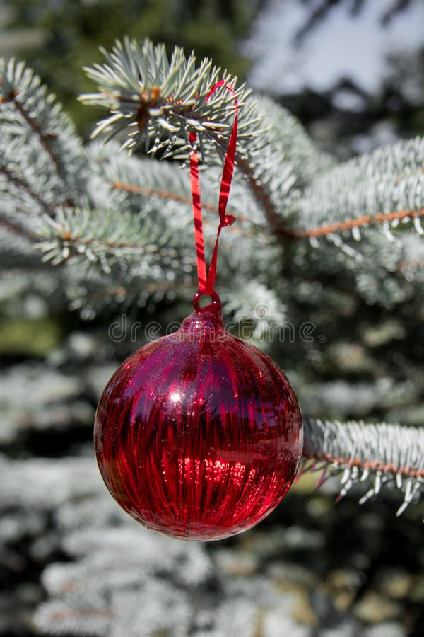 Red christmas ornaments, red ball, on the xmas tree on blurred branch. Merry christmas card. Winter holiday theme. Happy New Year stock photos