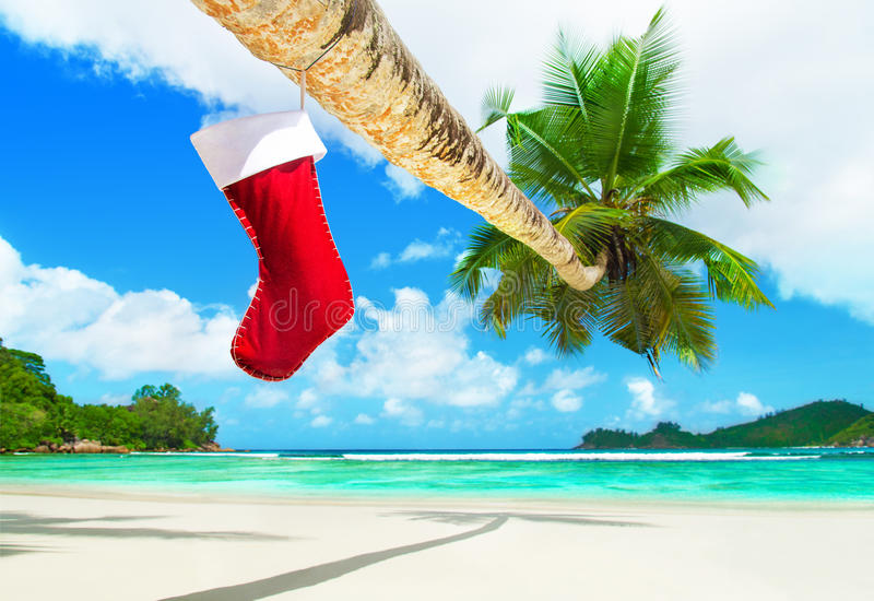 Red Christmas sock on palm tree at tropical ocean beach. Red Christmas sock with presents on palm tree at exotic tropical ocean beach. Holiday concept for New royalty free stock images
