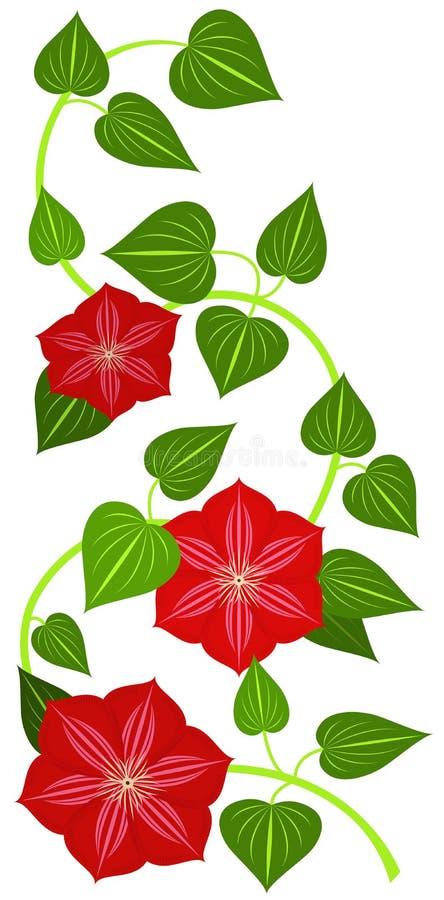 Red clematis flower vector illustration