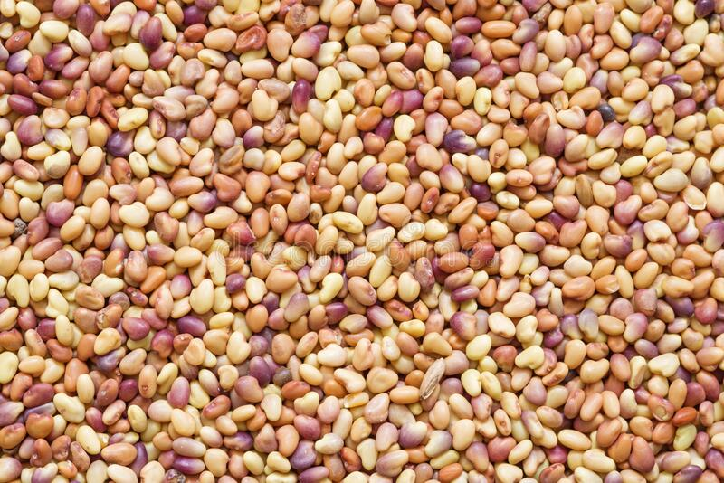 Red Clover Seeds stock photo
