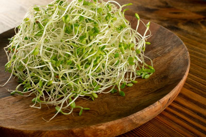 Red Clover Sprouts, Micro Green Healthy Eating Concept stock image