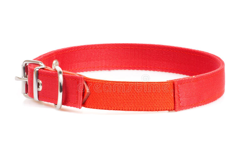 Download Red collar stock image. Image of canine, leash, fastener - 24921989