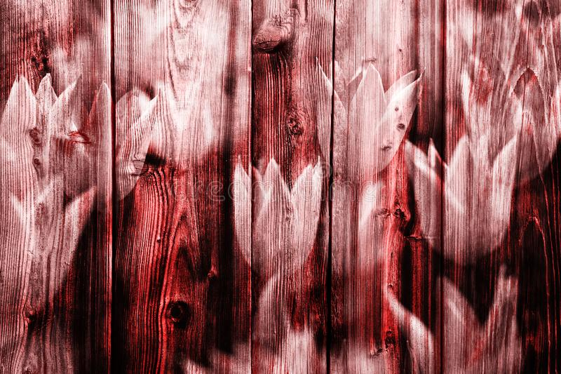 Red colored wooden boards with tulips background stock photo