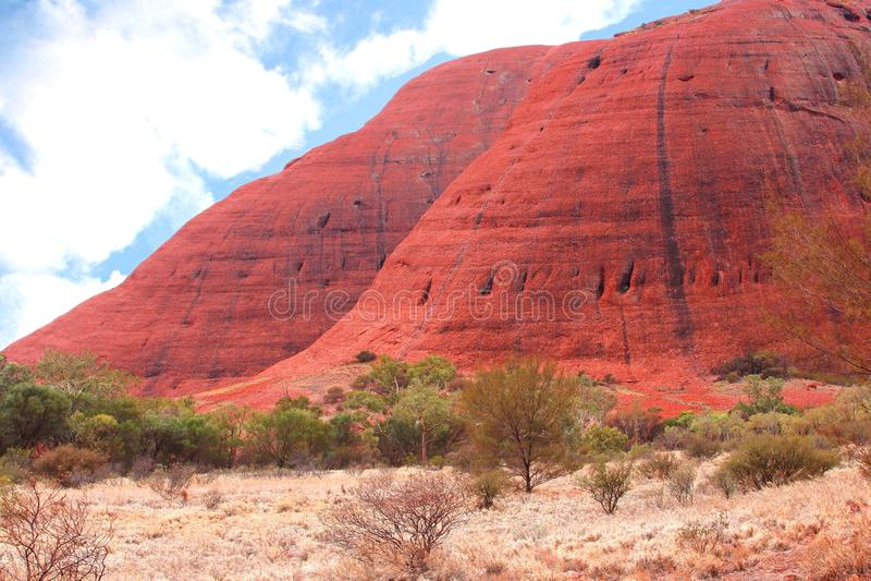Surreal red Olgas mountains (Uluru Kata Tjuta National Park),Australia. Landscape with trees and red colors of the Olgas mountains in Uluru Kata Tjuta National royalty free stock image