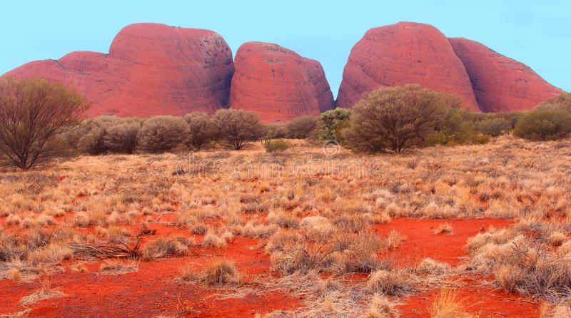 Colourful red Olgas mountains (Unesco), Australia. Landscape with trees and red colors of the Olgas mountains (Uluru Kata Tjuta National Park) in the Australian stock photography