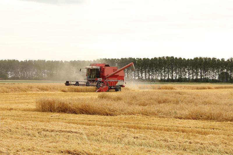 A red combine harvester is harvesting wheat. A big red combine harvester is harvesting ripe wheat plants in the dutch countryside in summer with a lot of dust stock image