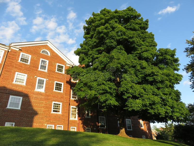 Red Condominium and Pretty Green Tree stock photos