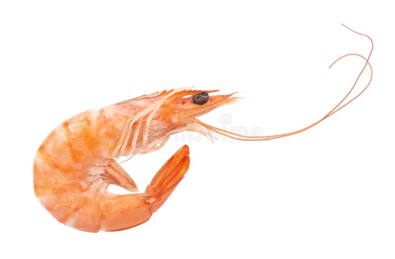 Red cooked prawn or tiger shrimp isolated on white background royalty free stock photos