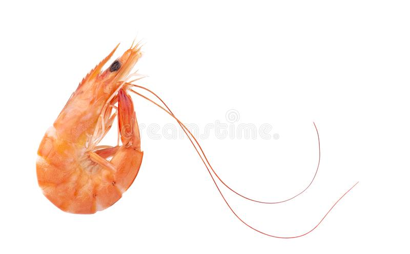 Red cooked prawn or tiger shrimp isolated on white background royalty free stock photography