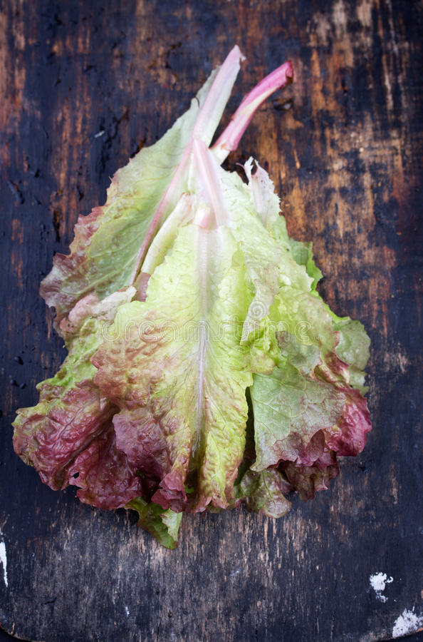 Red coral lettuce. On black rustic wooden cutting board royalty free stock photography