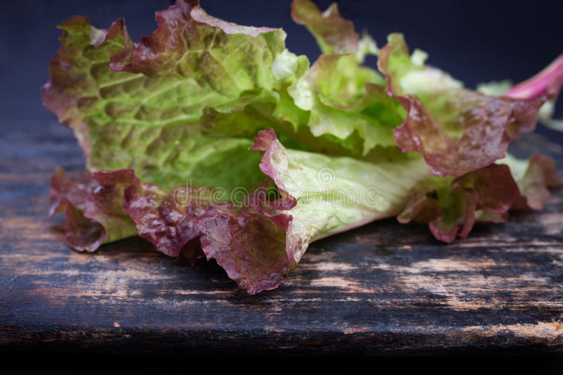 Red coral lettuce. On black rustic wooden cutting board royalty free stock photos