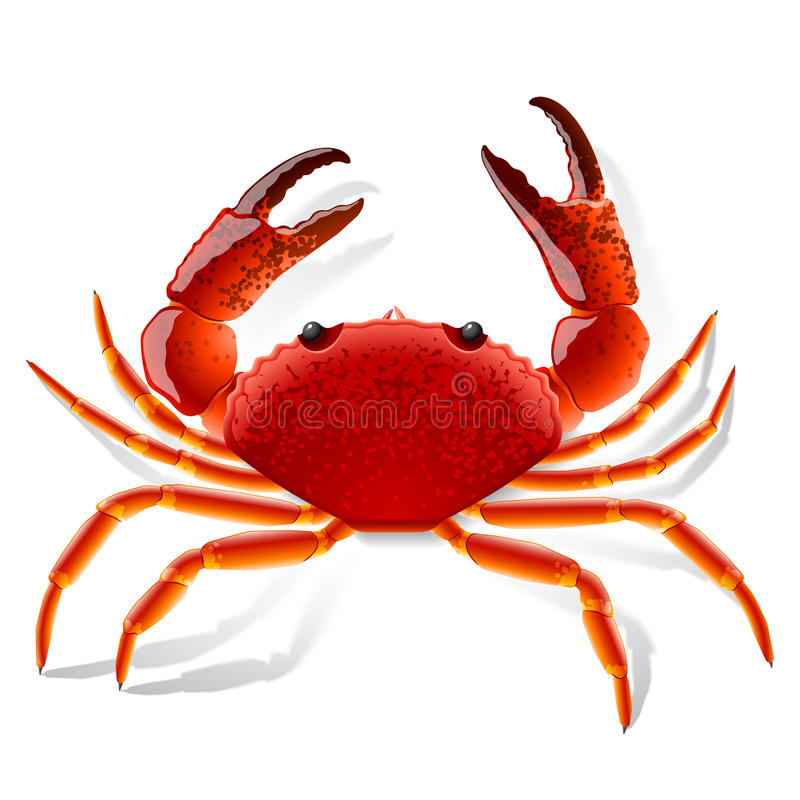 Red Crab. Vector illustration of a red crab