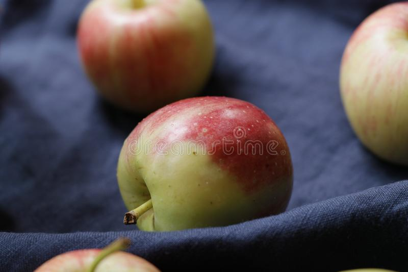 Red crab apple fruits. Malus. royalty free stock photos