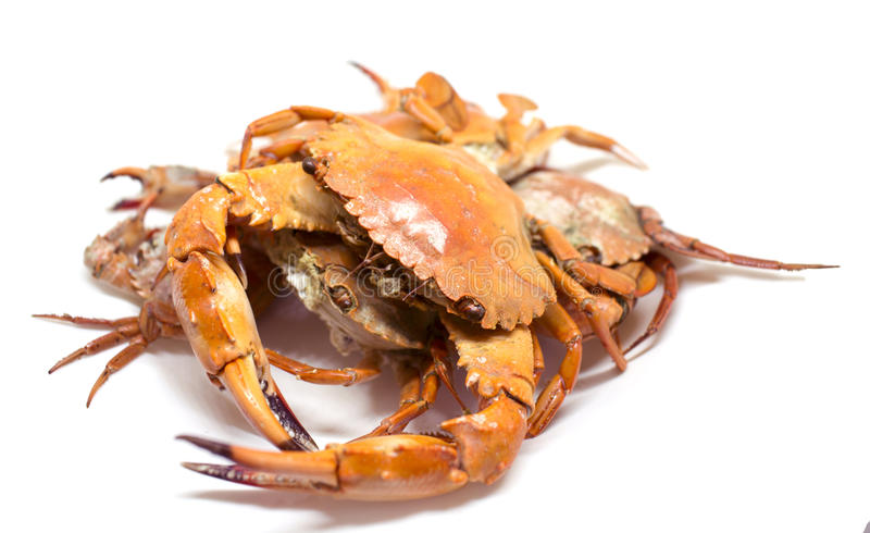 Red crab studio photo for restaurant menu or cooking recipe book. royalty free stock photo