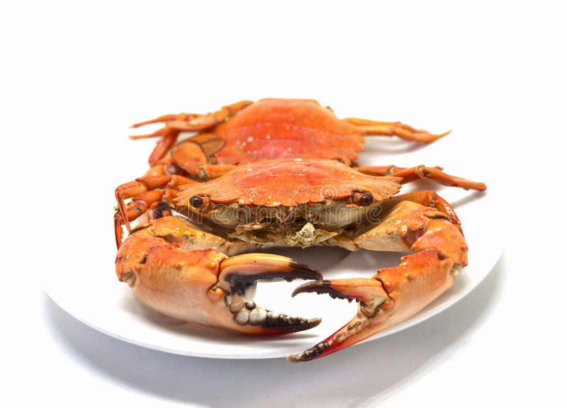 Red crab on white background. Two boiled sea crabs served for eating. stock images