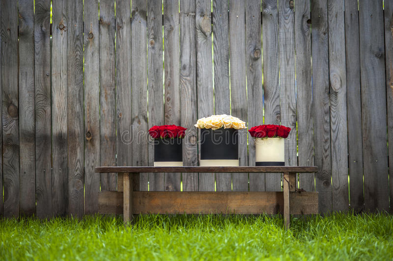 Red and creamy roses in gift boxes on the garden's bench. Selective focus stock photos