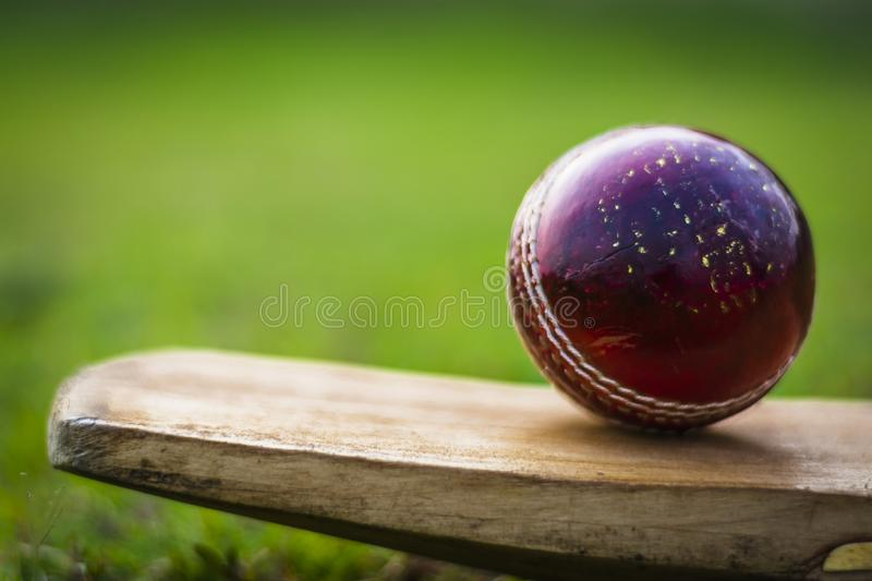 Red cricket ball on the bat in green playground. Red blued Cricket ball and bat with yellow grip good use for sports stock photos