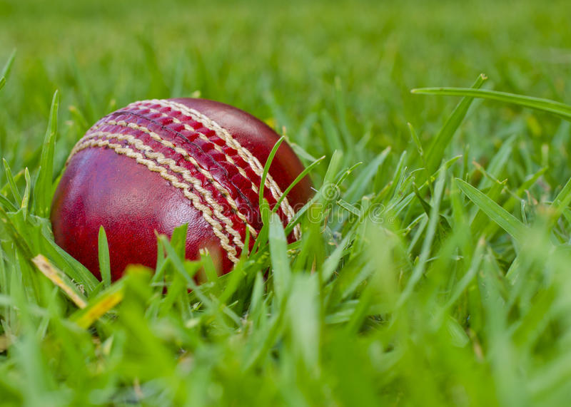 Red cricket ball in green grass stock photo