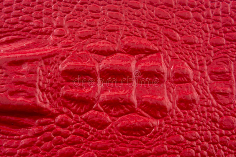 Red crocodile leather with alligator head royalty free stock images