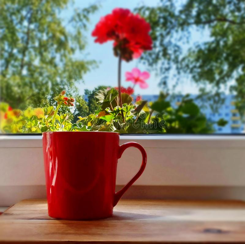 Red cup on window top with french red geranium window gree lives outdoor tree nature. Red cup on window top with french red geranium window gree lives outdoor royalty free stock photos