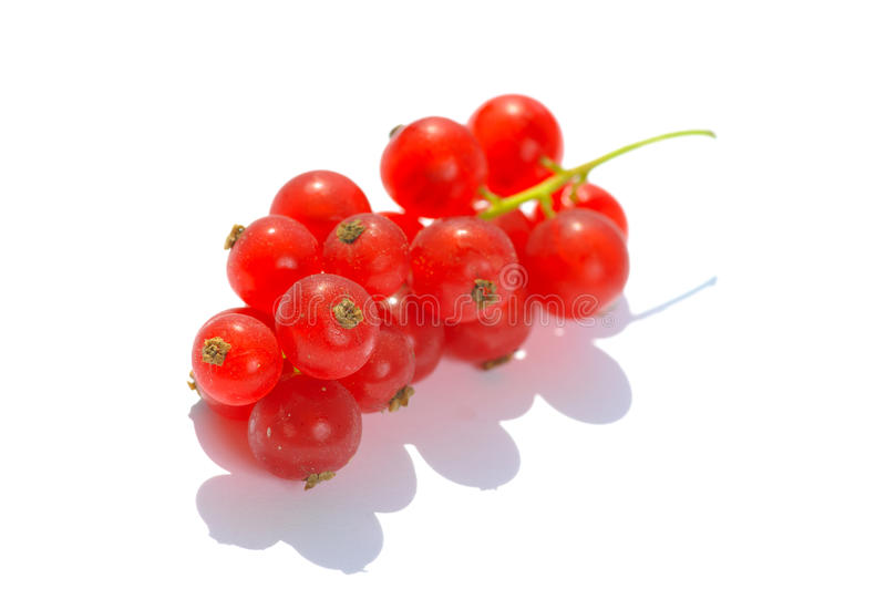 Red currant. Isolated on the white background royalty free stock images